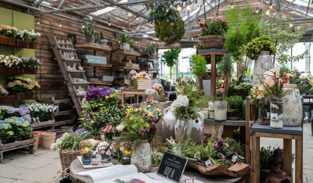 צמחים מעוצבים בחנויות
